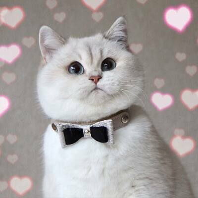 Smart Animal Luxury Leather Cat Collar - Fashion Collection - Bow Tie Cat Collar