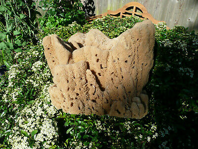 Large Brown Natural Unbleached Sea Sponge    33 cm TALL  X  36 CM WIDE APPROX