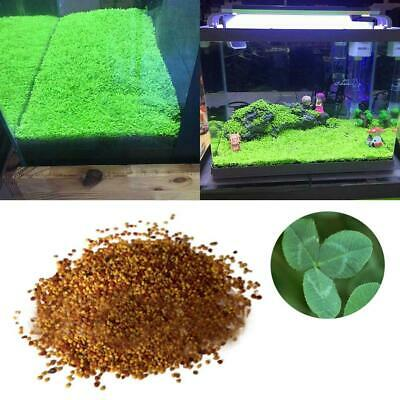 Plant Seed Fish Tank Aquarium Aquatic Water Grass Garden Foreground Plant Decor