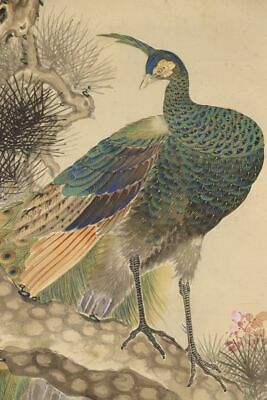 """JAPANESE HANGING SCROLL ART Painting """"Peacock"""" Asian antique  #E9793"""