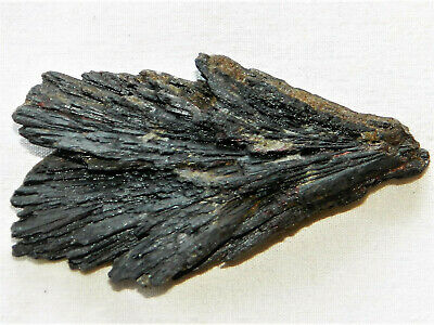 Fantastic 29.24 Grams Black Kyanite Fan Blade Mineral Specimen  Natural Crystal