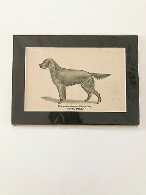 DOG Gordon Setter, Vintage Dog matted vintage print - Champion Gordon Setter