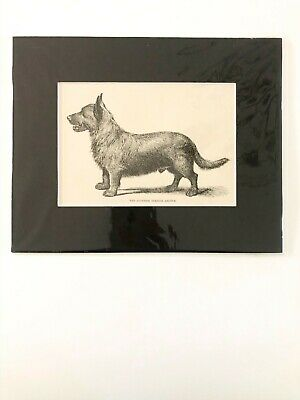 "DOG Scottish Terrier Argyle vintage print in black matte 8"" x 10"""
