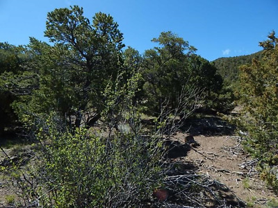Beauteous 5.06 Acre, Road, Great Views. Sangre De Cristo Ranches, Co. Cash Sale