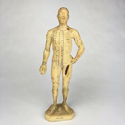 GOOD HEALTH Model Of Human Body MALE Model Acupuncture Points Meridians