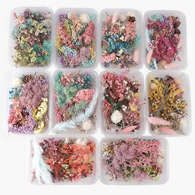 Dried Flowers Natural Floral Art Craft Scrapbooking Resin Jewelry Making m №+