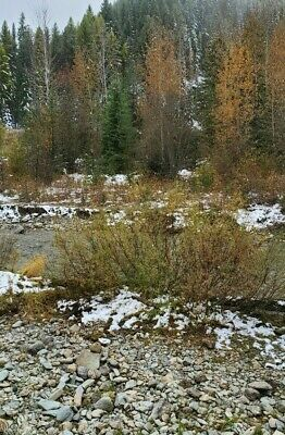 GOLD MINE Historic St Regis Montana GENTLE NUGGET GOLD  Gold Mining Claim