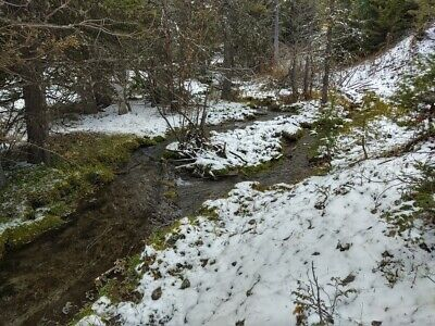 GOLD MINE Historic Avon MT Boston Dollar Placer 20 Acre Gold Mining Claim