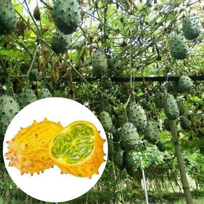 20 pcs of cucumis metuliferus seeds la graine des graines seed vegetable pl P5G9