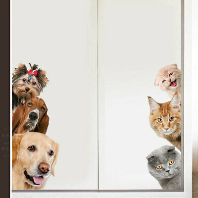 H579 Cat In A Box Funny Animals Smashed Wall Decal 3D Art Stickers Vinyl Room