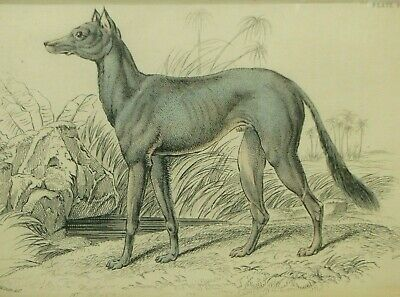Antique Dog Breed Print Col. H Smith 1850's Aquatint Hand Colored 19th c Species