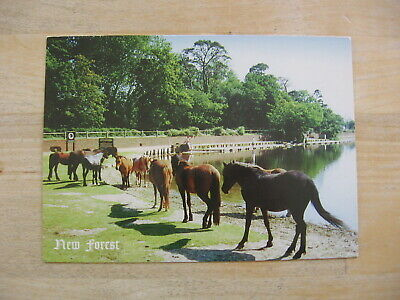 Nf 075 Priory Cards 27 Aug 2001 Postcard - Ponies At Hatchet Pond - New Forest