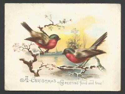 G65 - Birds On Snowy Branches - Large Victorian Xmas Card