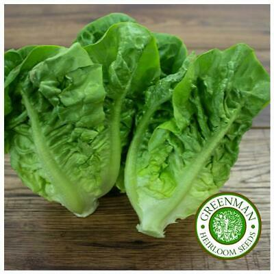 500 Graines de Laitue Romaine, Little Gem. Heirloom. Lettuce Seeds