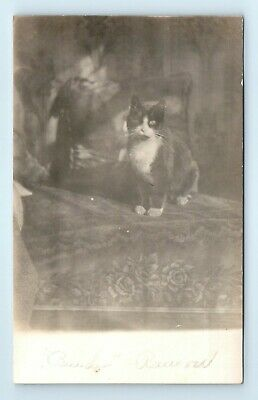 "c1910 Fluffy Black and White Kitten / Cat RPPC Postcard ""Beuder"" - AZO - Roses"