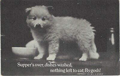 "1911 J G STEELE PHOTO POSTCARD ""Supper's Over, Dishes Washed...By Gosh!"" Puppy"