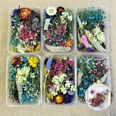 Assroetd Real Dried Flowers Pressed Leaves for Epoxy Resin Jewelry Making DIY~