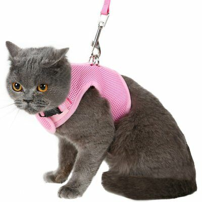 Escape Proof Cat Harness with Leash - Holster Style Adjustable Soft Mesh Large