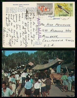 Mayfairstamps Singapore 1966 Bullock Carts Malacca Chrome to US Picture Postcard