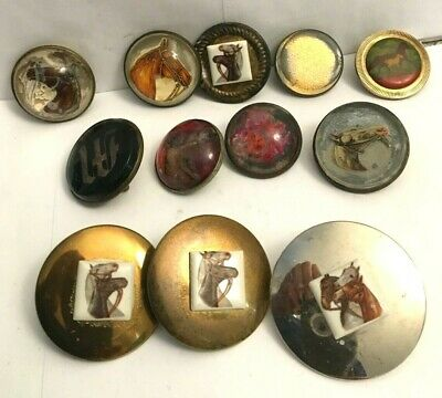 Lot Of ( 12 )  Horse Bridle Buttons