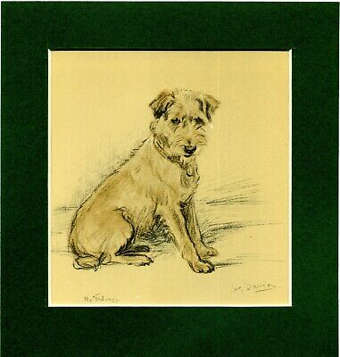 Lucy Dawson ~ Border Terrier ~  Colour Print Genuine Vintage 1936