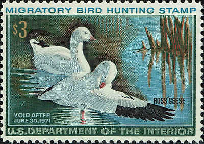 """Rw#37 1970 $3.00 """"Ross's Geese"""" Duck Stamp Mint-Og/Nh--Vf+"""