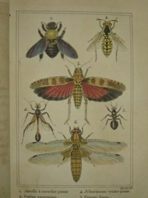 C. 1822, insects: bees, spiders. color plates, antique