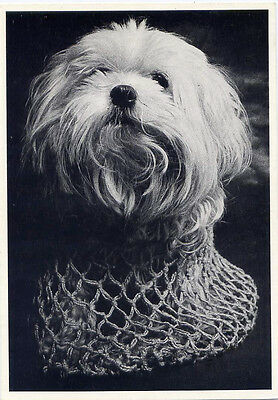 Lucynka the Terrier in a carrier bag 1975•Dog Photo by Antonin Maly•POSTCARD