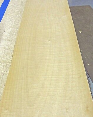 """Curly Maple Figured wood veneer 9"""" x 103"""" raw no backing 1/42"""" thickness """"A"""""""
