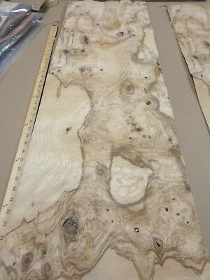 "Olive Ash Burl wood veneer 14"" x 44"" raw with no backing 1/42"" thickness AA"
