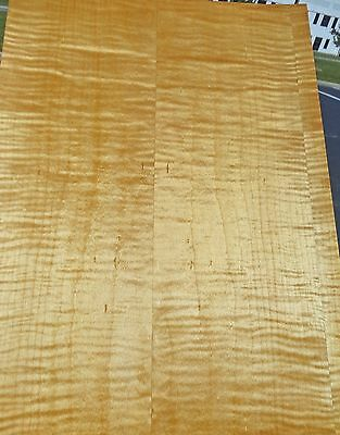 """Maple Curly Figured Tiger wood veneer 13"""" x 18"""" (1/12th"""" thick) on wood backer"""