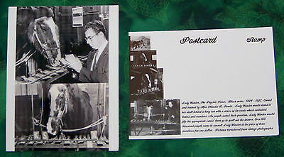 2 Lady Wonder the Psychic Horse Postcards, Was entertainment in Early 1900's NEW