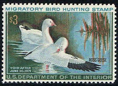 """Rw#37 1970 $3 """"Ross's Geese"""" Duck Stamp Mint-Og/Nh--Xf/Superb"""