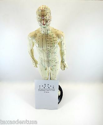 "Professional Educational Acupuncture 20"" Male 50cm Anatomy Medical Model IT-090"