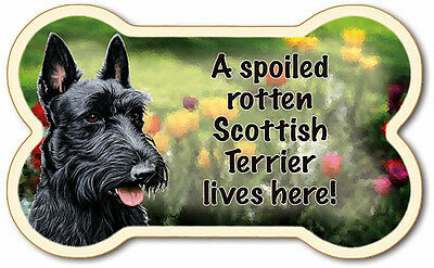 #84-138 Scottish Terrier Bone Shaped Magnet Made In USA W/Free USA Ship - New!