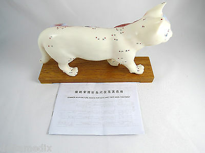Professional Educational Acupuncture Cat Anatomy Medical Veterinary Model IT-111