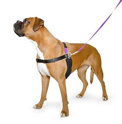 Ancol Happy at Heel Non Pull Dog Harness & Lead Set + DVD - All Sizes