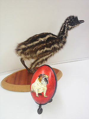artist original Hand Painted bulldog design Decorated Emu Egg.