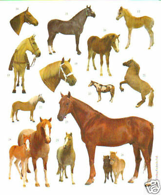 Horse-Pony Animal-10 -Realistic Photograph Stickers Sheets-Crafts-Scrapbooking