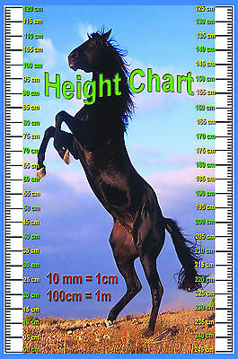 LAMINATED HEIGHT CHART EDUCATIONAL SCHOOLS KIDS POSTER WALL CHART 15X22.5 inches
