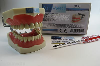 Dental Typodont Teaching Model 860 Universal Plate Columbia Compatible ARTMED