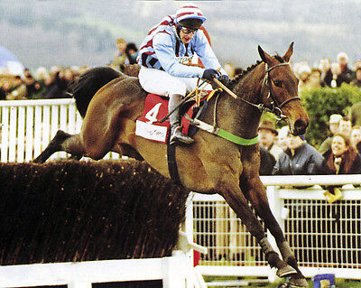 Best Mate Ridden By Jim Culloty Photo Print 03