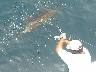 Puerto Vallarta fishing with Capt. Pete