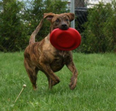 KONG Dog Flyer Frisbee Fetch Pet Toy Red/Black Extreme Large/Small Flying Disc