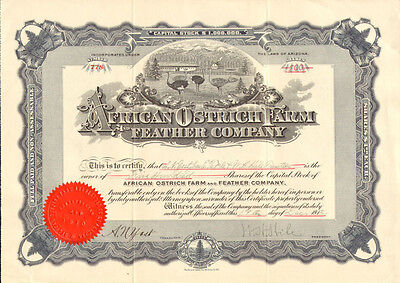 African Ostrich Farm and Feather Company   1912 stock certificate share