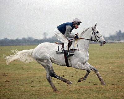 Desert Orchid 07 Ridden By Colin Brown (Horse Racing) Photo Print