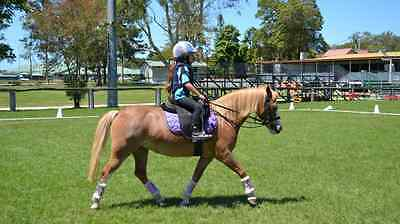 Pony Grass (Control) Chambon Reins - Stop pony from pulling kids out of saddle
