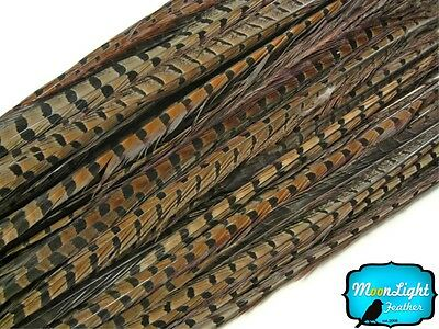 """Pheasant Feathers, 18-20"""" Natural Ringneck Pheasant Tail Feathers - 50 Pieces"""