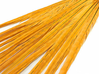 """50 Feathers 20-22"""" Golden Yellow Long Ringneck Pheasant Tail Wholesale Halloween"""