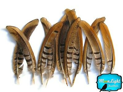 "Pheasant Feathers, 6-8"" Natural Reeves Venery Tail Feathers - 10 Pieces"